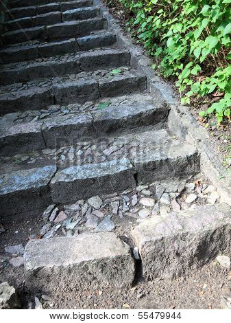 Concrete Stairs In The Jungle