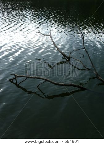 Branch In Lake