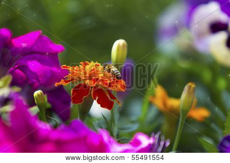 Beautiful colorful floral background with a bee