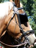 picture of blinders  - Bridled horse with blinders in parade formation on a sunny day - JPG