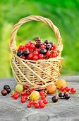 Red Currants And Black Currants In Basket