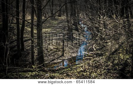Little creek in a dark forest