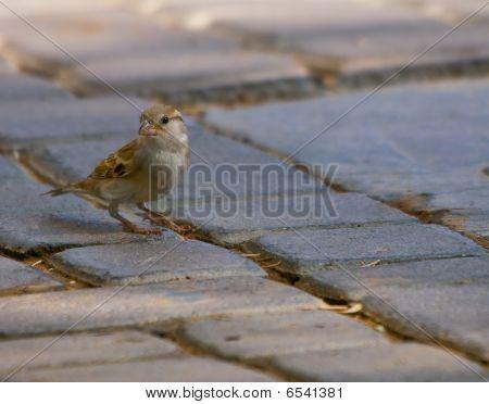 A bird on the ground