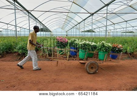 african farms