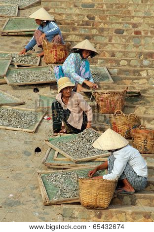 Muine, Vietnam - Feb 13, 2009: Vietnamese Women Sort Fish For The Famous Fish Sauce Nouc-mam. Extrac