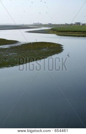 Suburban Wetlands
