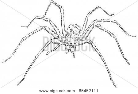 big spider - front view - isolated on background