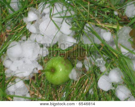 Hailstones In A Garden