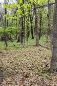 stock photo of starving  - Starved rock state park in Illinois view of the forest from one of the hiking trails - JPG
