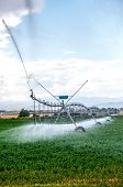 foto of alfalfa  - Alfalfa field being watered with a center pivot irragation system in north central Colorado USA - JPG