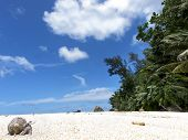 picture of hermit  - hermit crab crawling on sandy beach Silhouette island Seychelles - JPG