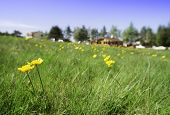 picture of chalet  - Green meadow with flowers and chalet on the background - JPG