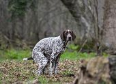 stock photo of pooper  - dog pooping outside in the woods or park - JPG