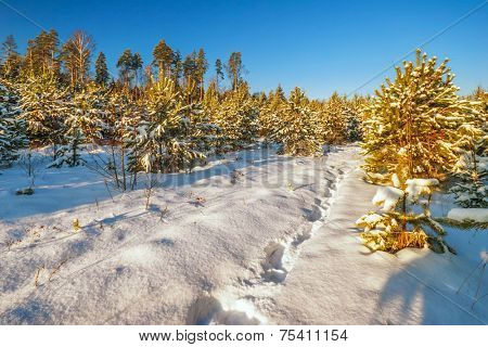 winter landscape with snowdrifts and deep blue sky