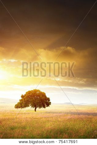 Rural landscape with a single tree in a flowery plain at sunset