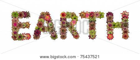 Earth Uppercase Letters From Bromeliad Flower