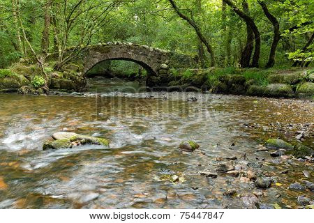 Forest Bridge And Stream