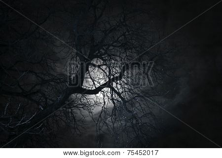 Bare Tree In Moonlight