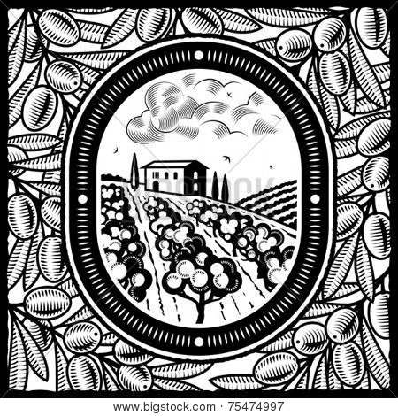 Olive grove black and white. Vector
