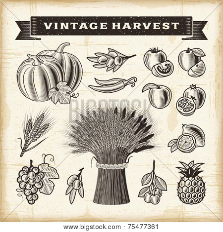 Vintage harvest set. Fully editable EPS10 vector.