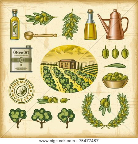 Vintage colorful olive harvest set. Fully editable EPS10 vector.
