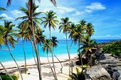 image of bottom  - Topical Palms at Bottom Bay , Barbados, Caribbean Bottom Bay is one of the most beautiful beaches on the Caribbean island of Barbados. It is a tropical paradise with palms hanging over turquoise sea - JPG
