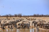 stock photo of veld  - Elephants drinking from a waterhole in Etosha National Park - JPG