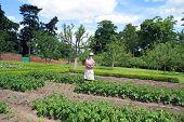 stock photo of scarecrow  - vegetable garden or a kitchen garden or a field with a scarecrow - JPG