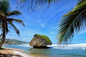 image of greater antilles  - beautiful bay of Bathsheba at eastcoast of Barbados - JPG
