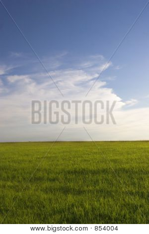 Green grass field and blue sky1