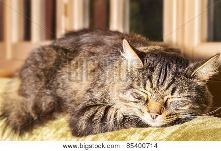 Tortoiseshell cat asleep on couch in front of windows. Closeup of head.
