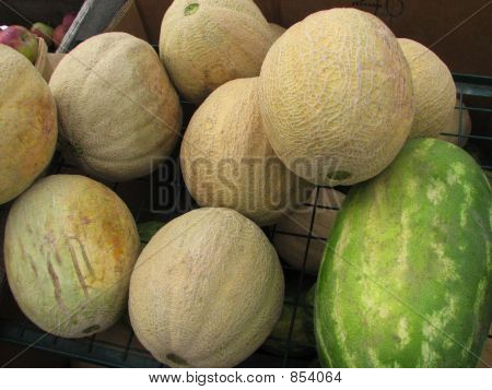 Melons 704
