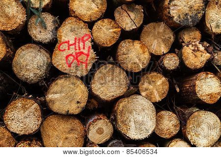 Close Up Of Forestry Log Pile Words Chip Dry