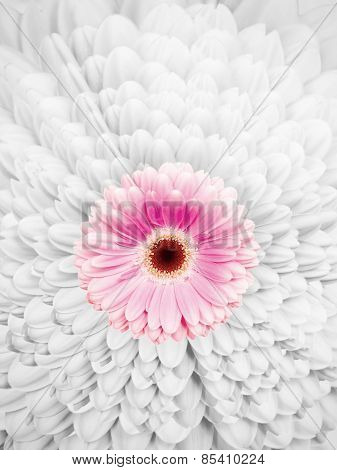Blossom With Pink Colored Petals Amids A Petal Pattern