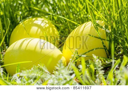 Yellow Easter Eggs In Grass, Closeup