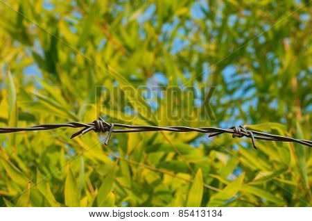 Barbed Wire On Bamboo Background