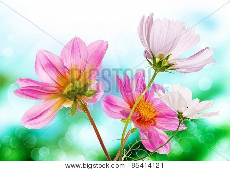 Beautiful  Fresh Pink Garden Flowers On Abstract Spring Nature Background