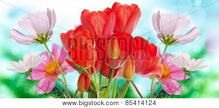 Beautiful  Fresh  Garden Flowers On Abstract Spring Nature Background