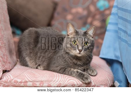 Cat Lying On A Chair