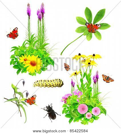 Collection of summer flowers, insects and green leaves. Isolated on white background