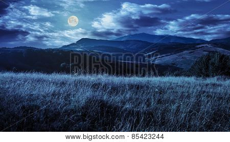 Meadow With Tall Grass In Mountains At Night