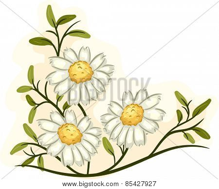 Illustration of a Bunch of Chamomile Flowers in Full Bloom