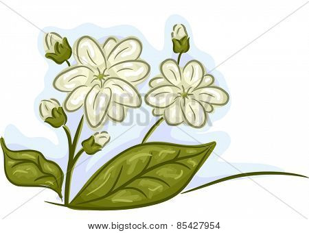 Illustration of a Bunch of Jasmine Flowers in Full and Mid Bloom