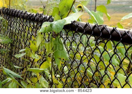 wet leaves on a chain link fence