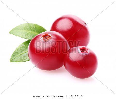 Cranberry in closeup
