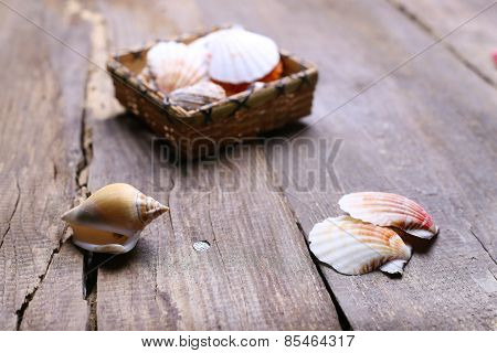Shells On A Table