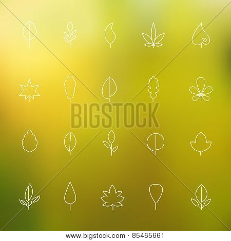 Thin contour icons leaves