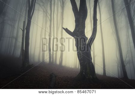 Scary forest with fog on Halloween night
