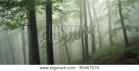 panoramic photo of natural forest with fog
