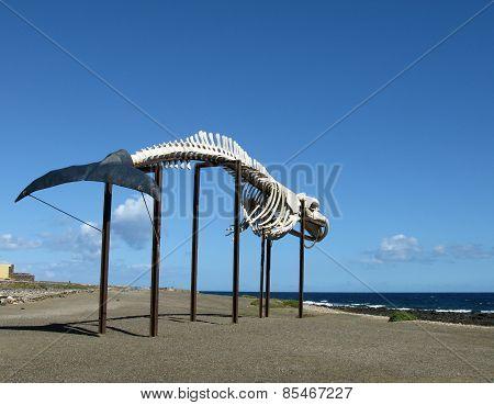Whale sketeton in Salinas del Carmen